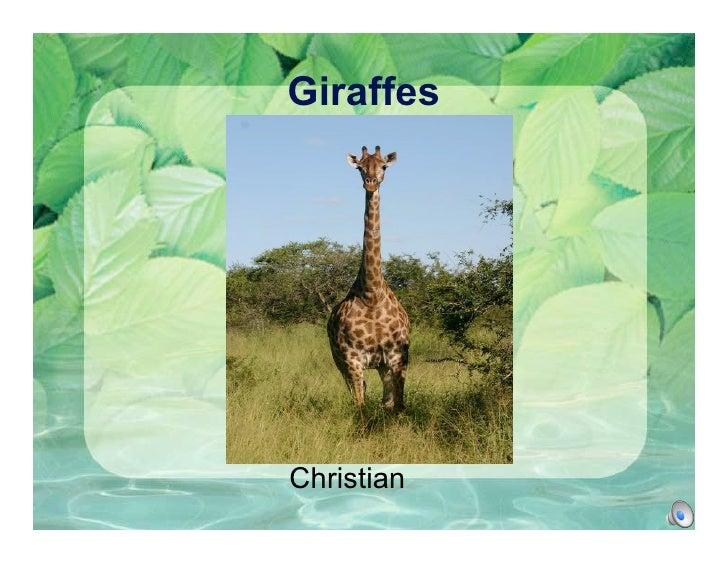 Giraffes     Christian