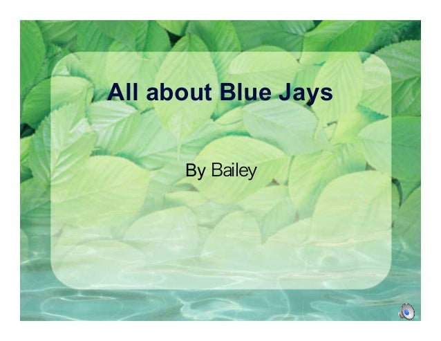 All about Blue Jays By Bailey