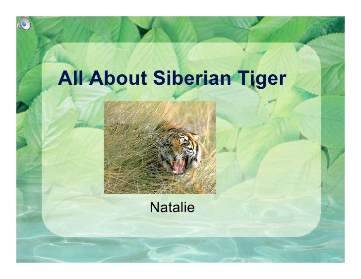 All About Siberian Tiger              Natalie