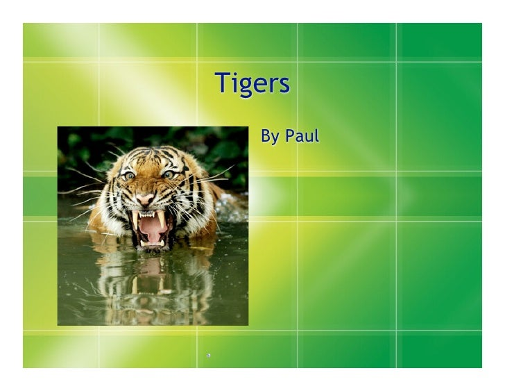 Tigers    By Paul
