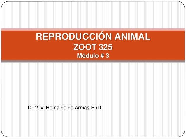 Dr.M.V. Reinaldo de Armas PhD. REPRODUCCIÓN ANIMAL ZOOT 325 Módulo # 3