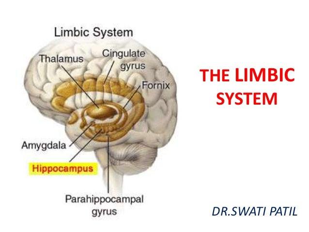 5 limbic systemLimbic System Location