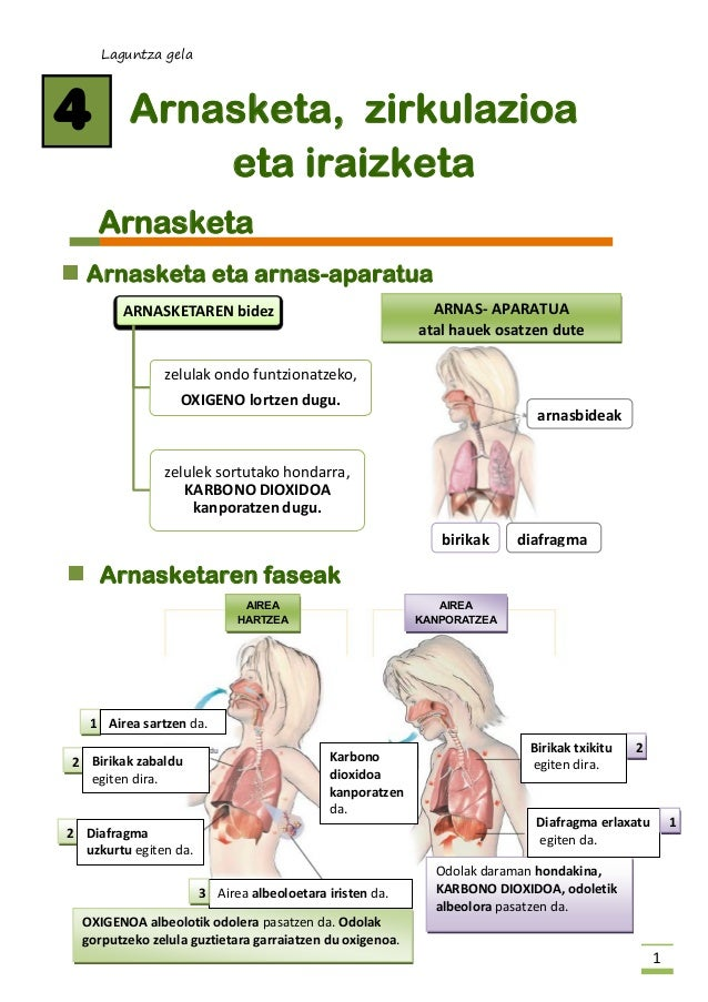 Laguntza gela  1  Arnasketa, zirkulazioa  eta iraizketa  Arnasketa  Arnasketa eta arnas-aparatua  Arnasketaren faseak  4  ...