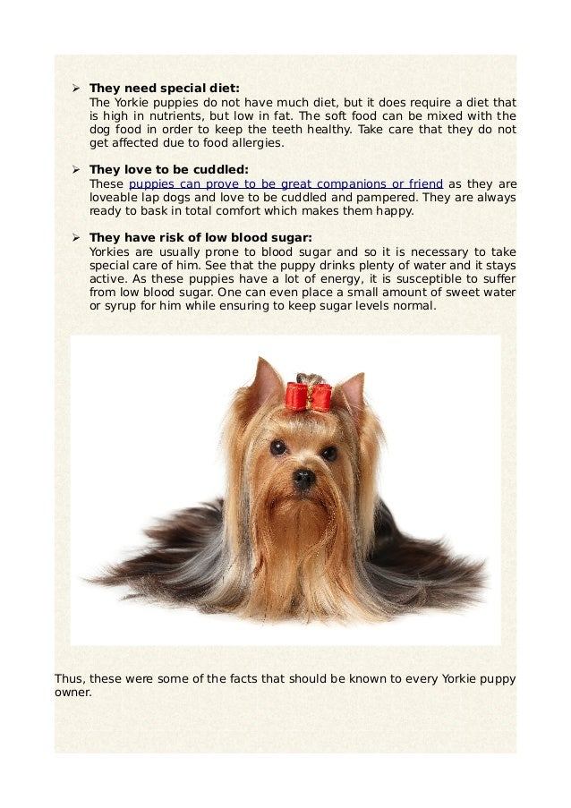 5 Must Know Facts About Yorkie Puppies