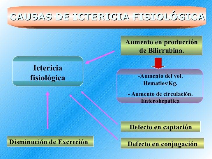 Ictericia fisiológica Aumento en producción de Bilirrubina. - Aumento del vol. Hematies/Kg. - Aumento de circulación. Ente...