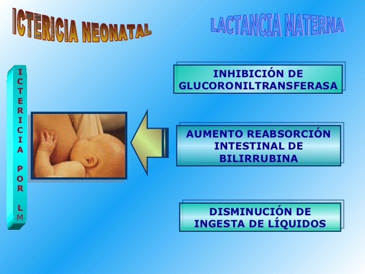 ICTERICIA NEONATAL LACTANCIA MATERNA I C T E R I C I A P O R L M INHIBICIÓN DE GLUCORONILTRANSFERASA AUMENTO REABSORCIÓN I...
