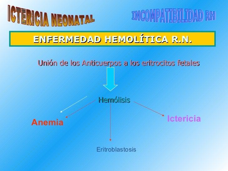 ENFERMEDAD HEMOLÍTICA R.N. <ul><li>  Unión de los Anticuerpos a los eritrocitos fetales </li></ul><ul><li>Hemólisis </li><...