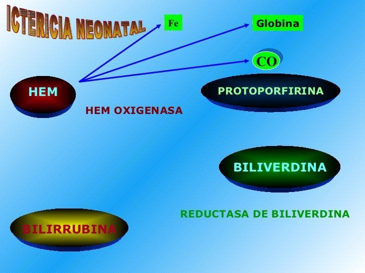 PROTOPORFIRINA BILIVERDINA HEM OXIGENASA Fe REDUCTASA DE BILIVERDINA Globina CO HEM BILIRRUBINA ICTERICIA NEONATAL
