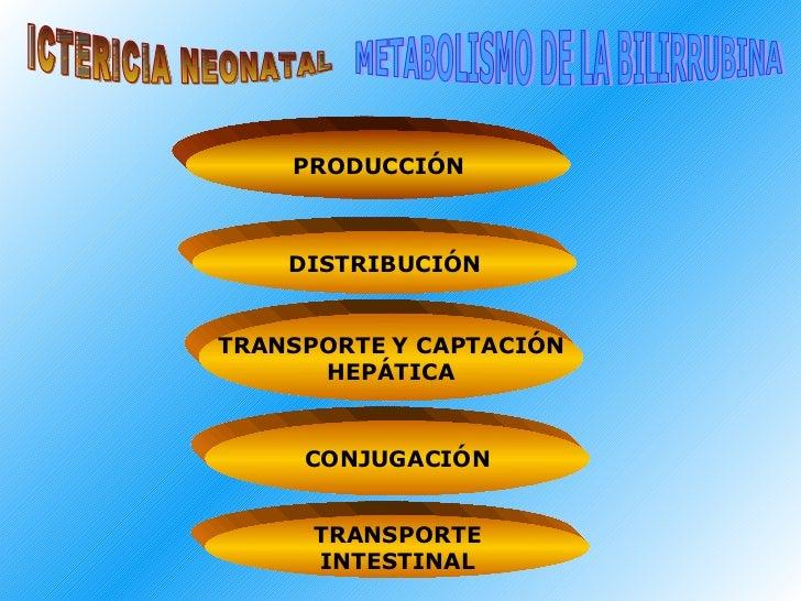ICTERICIA NEONATAL METABOLISMO DE LA BILIRRUBINA PRODUCCIÓN DISTRIBUCIÓN TRANSPORTE   Y CAPTACIÓN HEPÁTICA CONJUGACIÓN TRA...