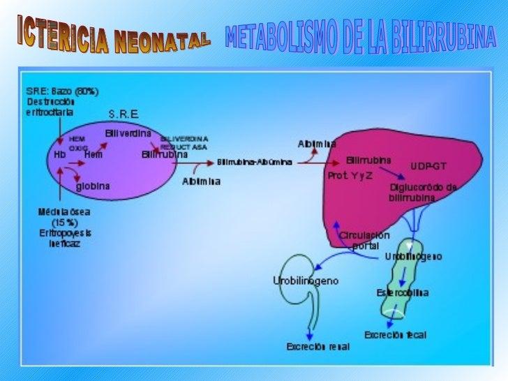 ICTERICIA NEONATAL METABOLISMO DE LA BILIRRUBINA