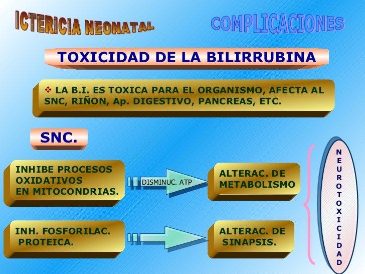 ICTERICIA NEONATAL COMPLICACIONES TOXICIDAD DE LA BILIRRUBINA <ul><li>LA B.I. ES TOXICA PARA EL ORGANISMO, AFECTA AL </li>...