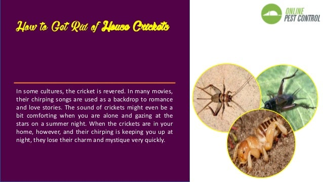 5 natural ways to get rid of house crickets