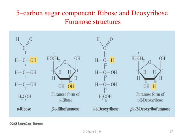 D Deoxyribose 5 nucleotides a...
