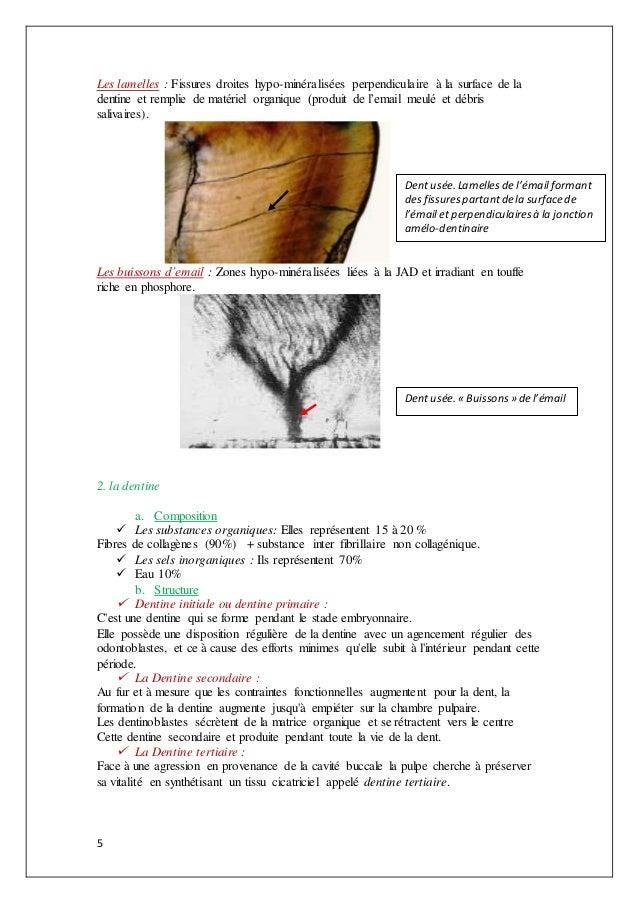 5 Les lamelles : Fissures droites hypo-minéralisées perpendiculaire à la surface de la dentine et remplie de matériel orga...