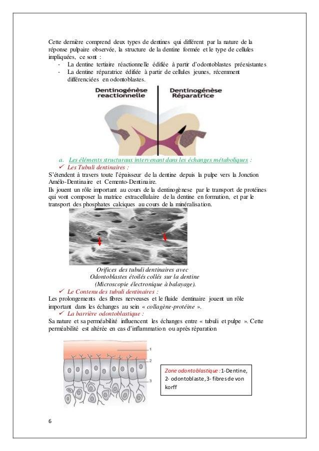 6 Cette dernière comprend deux types de dentines qui différent par la nature de la réponse pulpaire observée, la structure...