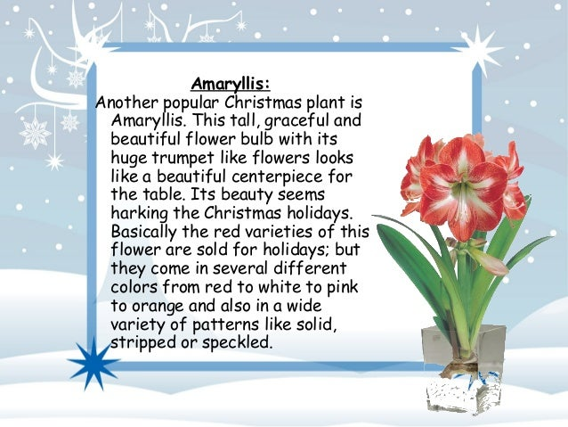 popular plants and flowers for christmas, Natural flower