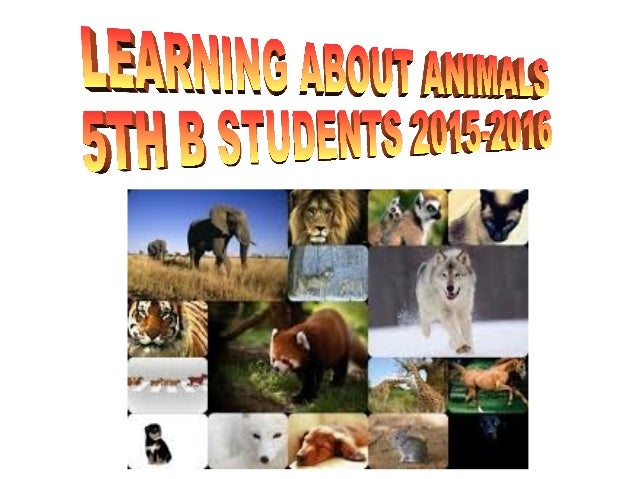 It,s an artic wolf. It's a mammal and it is vertebrate. It is white . It has got four legs and four paws. Its body is cove...