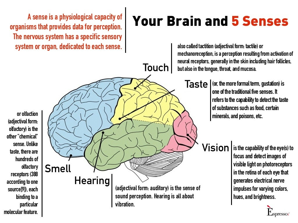 Your brain and 5 senses for 5 senses in architecture