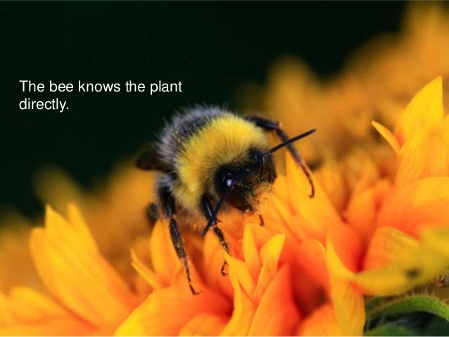 The bee knows the plant directly.