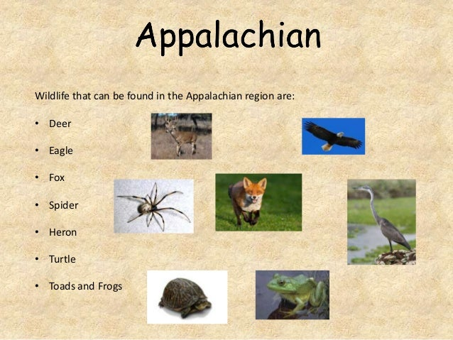 Wildlife that can be found in the Appalachian region are: • Deer • Eagle • Fox • Spider • Heron • Turtle • Toads and Frogs