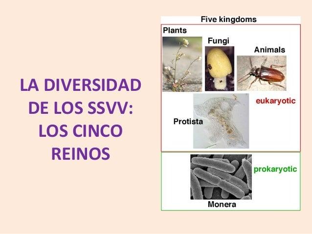 LA DIVERSIDAD DE LOS SSVV: LOS CINCO REINOS