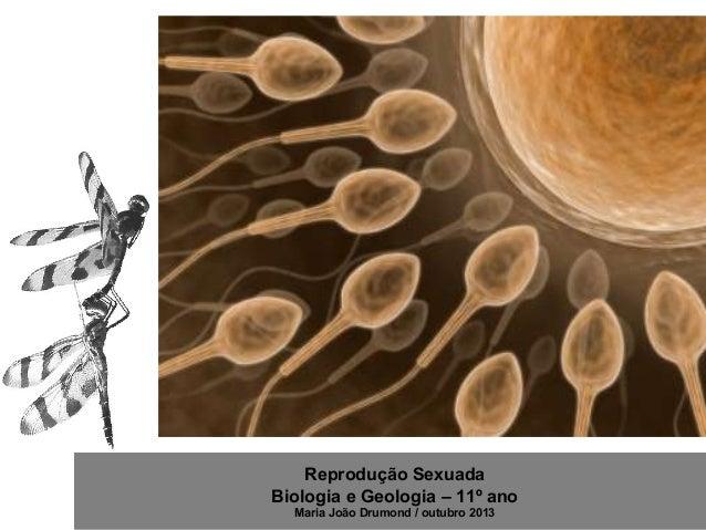 Reprodução Sexuada Biologia e Geologia – 11º ano Maria João Drumond / outubro 2013