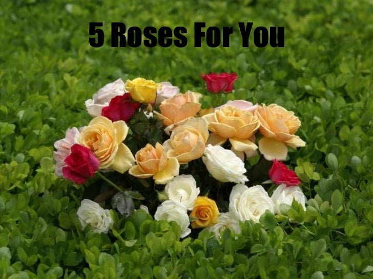 5 Roses For You