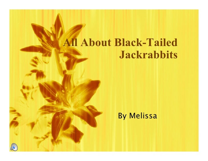 All About Black-Tailed            Jackrabbits               By Melissa
