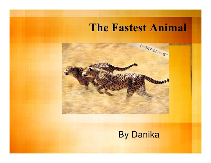 The Fastest Animal          By Danika