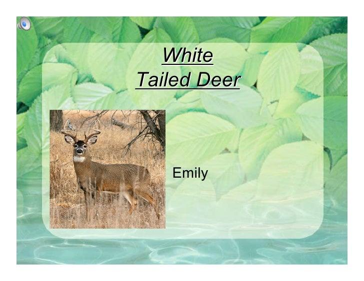 White Tailed Deer       Emily
