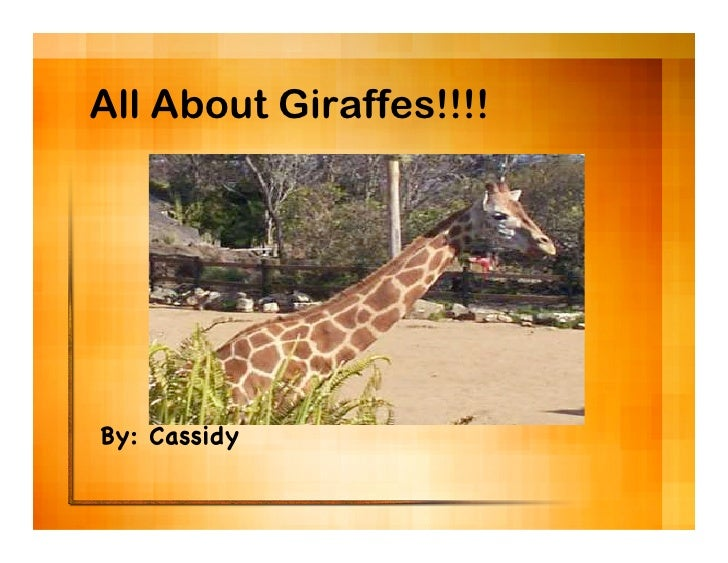 All About Giraffes!!!!     By: Cassidy