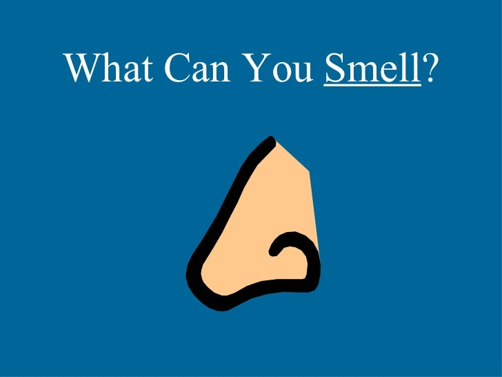 What Can You  Smell ?