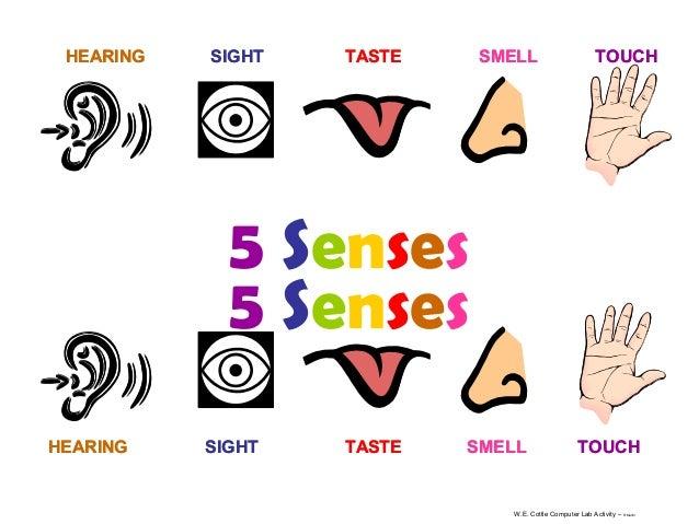 HEARING  SIGHT  TASTE  SMELL  TOUCH  5 Senses 5 Senses HEARING  SIGHT  TASTE  SMELL  TOUCH  W.E. Cottle Computer Lab Activ...