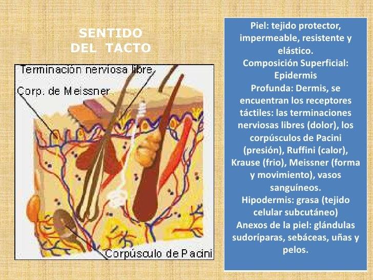 SENTIDO<br />DEL  TACTO<br />