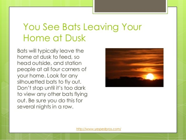 5 Signs You Have A Bat Infestation Call Yes Today For Help