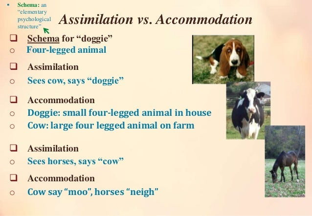 accomodation assimilation adult example
