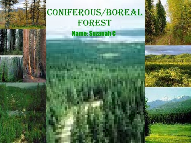 Coniferous/Boreal Forest Name: Suzanah C