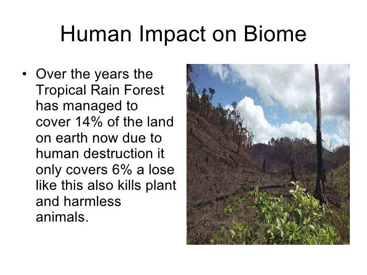 Technology's Impact On The Rain Forest