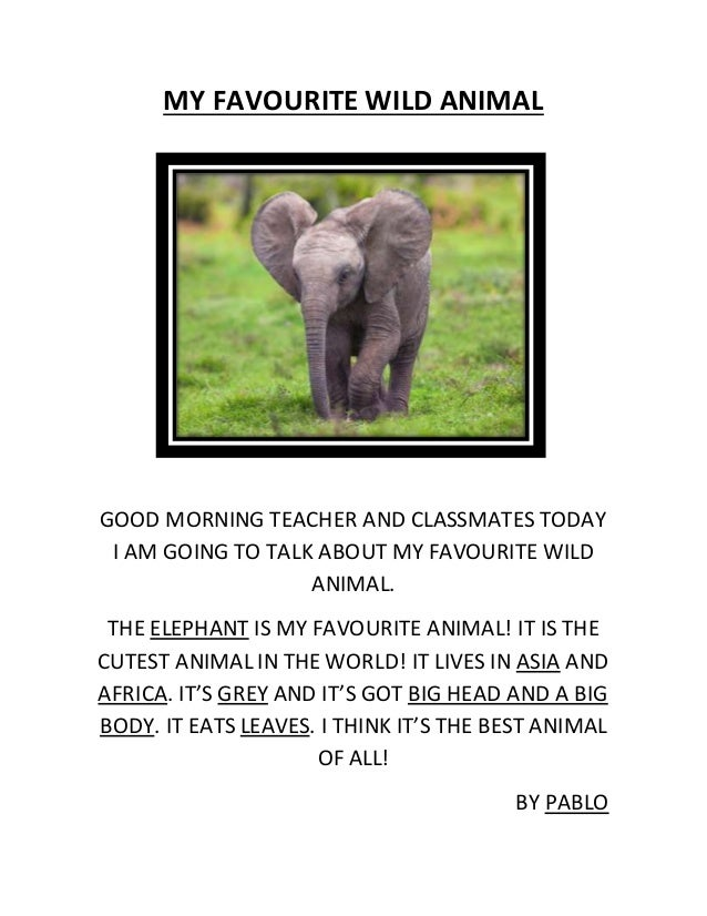 MY FAVOURITE WILD ANIMAL GOOD MORNING TEACHER AND CLASSMATES TODAY I AM GOING TO TALK ABOUT MY FAVOURITE WILD ANIMAL. THE ...