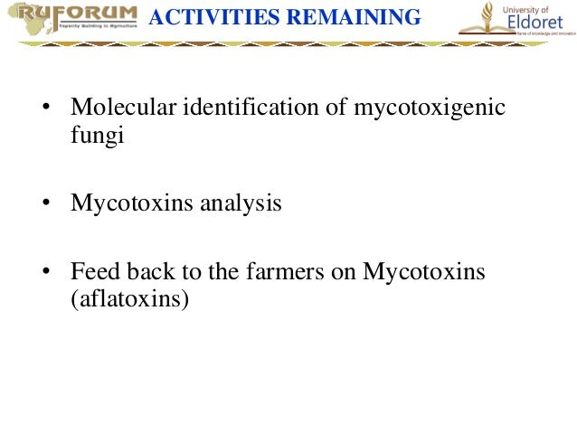 case study for 1407.docx - Case Study Woylies Fungi and ...
