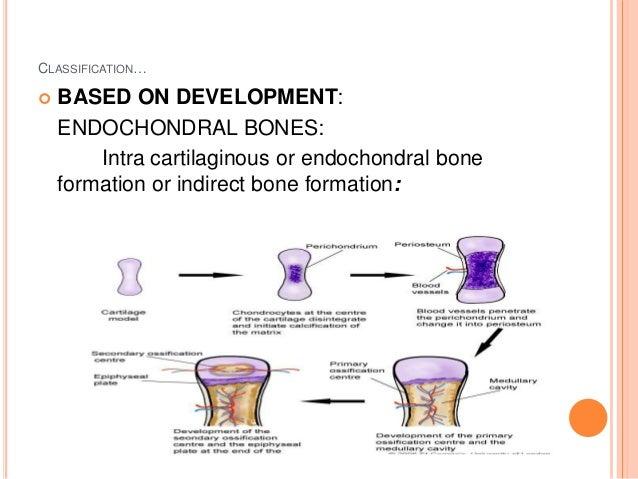 bone formation and resorption