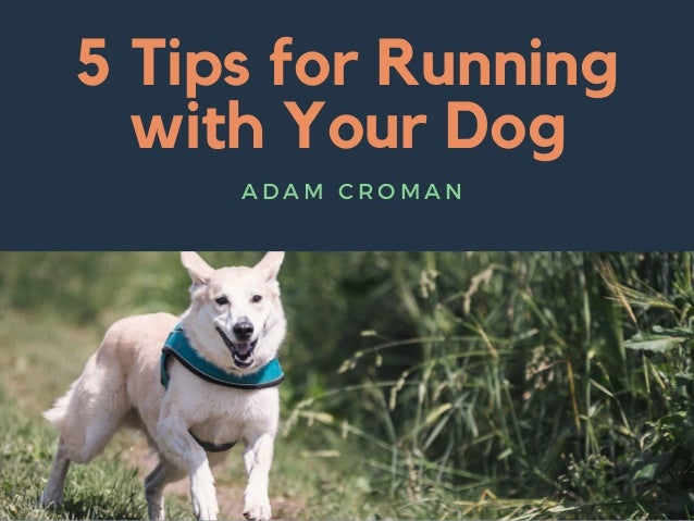 5 Tips for Running with Your Dog A D A M C R O M A N