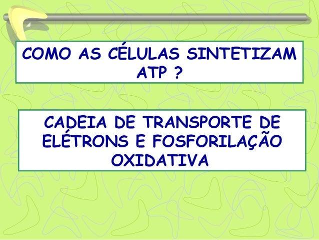 COMO AS CÉLULAS SINTETIZAM ATP ? CADEIA DE TRANSPORTE DE ELÉTRONS E FOSFORILAÇÃO OXIDATIVA