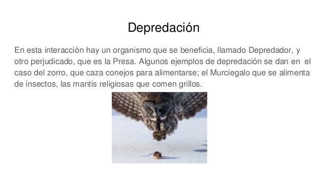 Depredación En esta interacciòn hay un organismo que se beneficia, llamado Depredador, y otro perjudicado, que es la Presa...