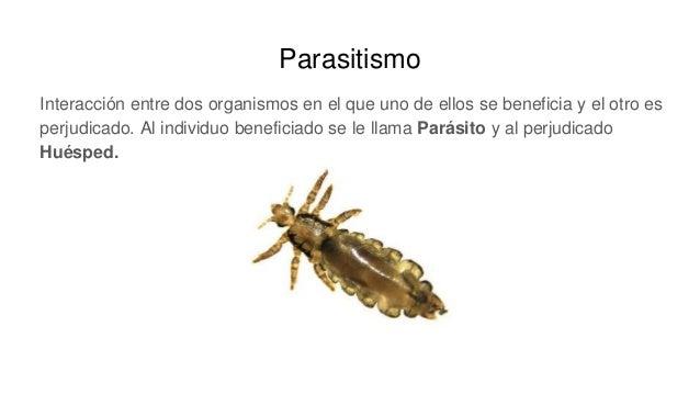 Parasitismo Interacción entre dos organismos en el que uno de ellos se beneficia y el otro es perjudicado. Al individuo be...