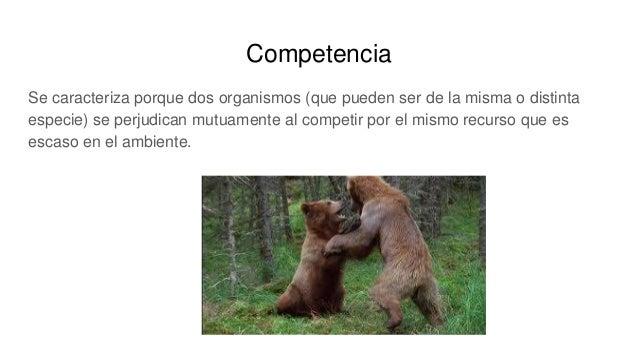 Competencia Se caracteriza porque dos organismos (que pueden ser de la misma o distinta especie) se perjudican mutuamente ...