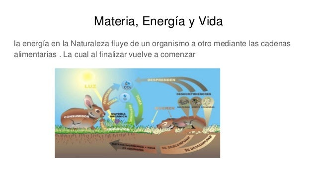 Materia, Energía y Vida la energía en la Naturaleza fluye de un organismo a otro mediante las cadenas alimentarias . La cu...