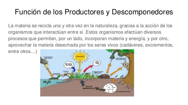 Función de los Productores y Descomponedores La materia se recicla una y otra vez en la naturaleza, gracias a la acción de...
