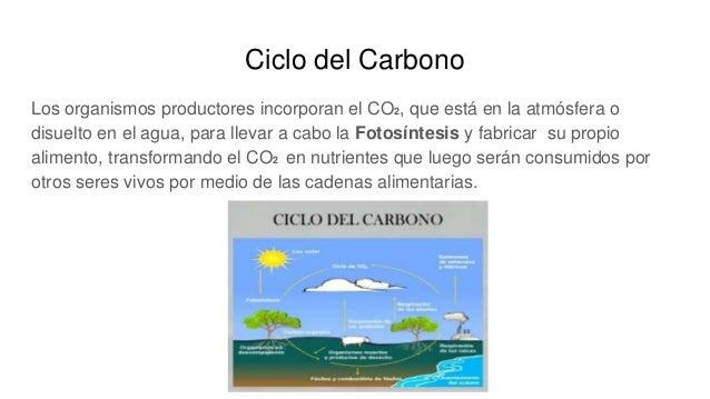 Ciclo del Carbono Los organismos productores incorporan el CO2, que está en la atmósfera o disuelto en el agua, para lleva...