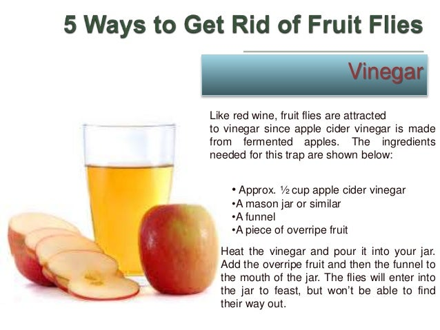 5 Ways To Get Rid Of Fruit Flies